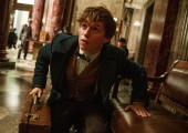 New Fantastic Beasts Footage Introduces An Unlikely Hero — And More Magical Creatures