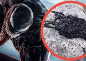Real Venom Symbiote Discovered in Viral Video Has the Internet Freaking Out